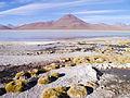 Altiplano, Bolivien (11214249954).jpg