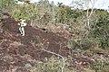 Alto Araguaia - State of Mato Grosso, Brazil - panoramio (1108).jpg