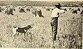 American game-bird shooting (1910) (14732460326).jpg