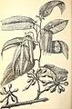 American journal of pharmacy (1881) (14759422946).jpg
