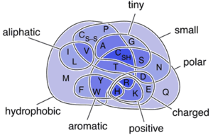 Venn Diagram of Amino Acids.