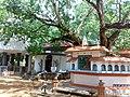 Ananda Bodhi Viharaya - panoramio (4).jpg