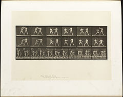 Animal locomotion. Plate 329 (Boston Public Library).jpg