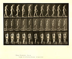 Animal locomotion. Plate 42 (Boston Public Library).jpg