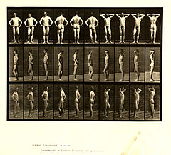Animal locomotion. Plate 530 (Boston Public Library).jpg
