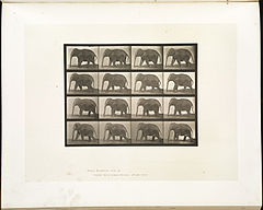Animal locomotion. Plate 732 (Boston Public Library).jpg