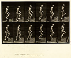 Animal locomotion. Plate 91 (Boston Public Library).jpg