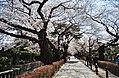 Aoyama Cemetery4.jpg
