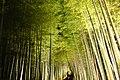 Arashiyama, Chikurin-no-michi (Bamboo Grove Road) -1 (December 2015) - panoramio.jpg