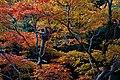 Arashiyama Park (8278674903).jpg
