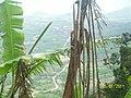 Aratuba CE Brasil - Alto da Serra - panoramio.jpg