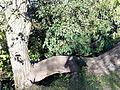 Arbol raro Reserva Ecologica.jpg