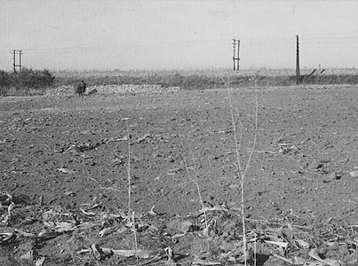 Archeological site Solnok in Dobrinci, 1966. year.jpg