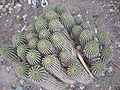 Arizona Cactus Garden 018.JPG