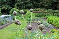 Artichokes, Speke Hall kitchen garden, 31 Aug 2017.jpg