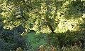 Ash tree, Ashday Lane, Southowram - geograph.org.uk - 260939.jpg