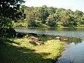 Asurankundu Reservoir - panoramio (1).jpg