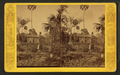 At Roger's Landing, Oklawaha River, Fla, from Robert N. Dennis collection of stereoscopic views.png