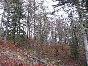 English: Auchteraw Woods Steep wooded hillside...