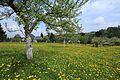 Auf der Krokuswiese in Drebach im Mai 2017..2H1A3073WI.jpg