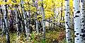Autumn Calgary Alberta. (8168766047).jpg