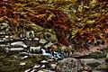 Autumn Flow 2 (73412529).jpeg