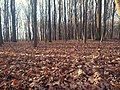 Autumn Forest (201072635).jpeg