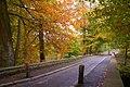 Autumn at Minnowburn near Belfast (4) - geograph.org.uk - 599612.jpg