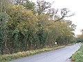 Autumn colour along a minor road at Wendlebury - geograph.org.uk - 1588894.jpg