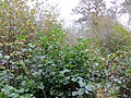 Autumn in Berrydown Woods - October 2014 - panoramio.jpg