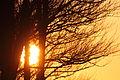 Autumn sunset (4090294308) (3).jpg