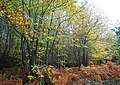 Autumnal Colours, Fore Wood - geograph.org.uk - 1577179.jpg