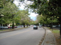 Belgrano Avenue, near the Flag Memorial, with floss silk trees along its central reservation
