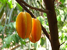 Averrhoa carambola Fruit.JPG