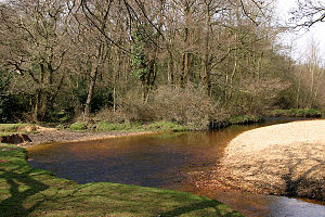 Avon Water, Hampshire - Avon Water, in the New Forest