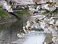 Azumicho, Toyama, Toyama Prefecture 930-0094, Japan - panoramio (8).jpg