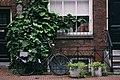 BIke and plants with brick (Unsplash).jpg