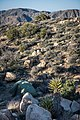Backcountry campsite between Juniper Flats and Covington Flat (40733991573).jpg