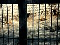 Bakı Zooloji Parkı - 04.JPG