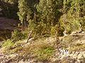Bakh Madhye Damudhara, Uttarakhand, India - panoramio - pramod nagher (1).jpg