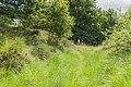Balloërveld, natuurgebied in Drenthe 12.jpg