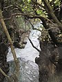 Banias Fall on Khermon River 12.jpg