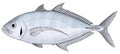 Barcheek trevally.png