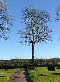 Bare tree and cross at Prästtorp graveyard, Brastad.jpg