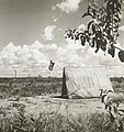 Barraca nas proximidades do Palácio da Alvorada - BR RJANRIO PH 0 FOT 00749 0025, Acervo do Arquivo Nacional.jpg