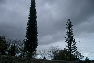 Base station subsystem - Two GSM base station antennas disguised as trees in Dublin, Ireland.