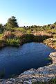 Bassa al riu Gorgos al seu pas pel terme de Dénia.JPG