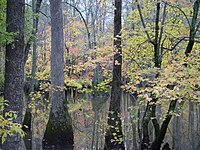 Bayou DeView watershed - Cache River National Wildlife Refuge.jpg