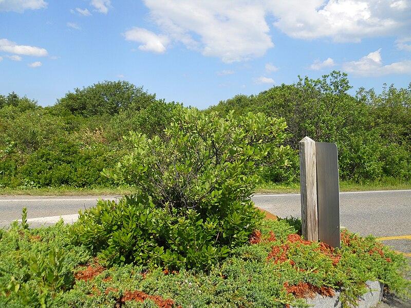 File:Beach plum, entrance.JPG