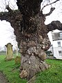 Beauly (Scotland) (13649993343).jpg